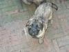 Angel januari 2006