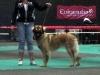 Eurodogshow met Caro.