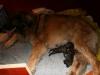 De eerste pup van het E nest.