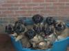 9-pups