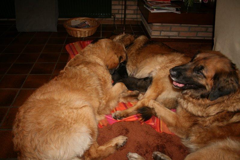 Met zijn allen pups verzorgen