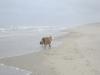 Strand van Texel.
