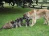Emma en de pups van het G nest