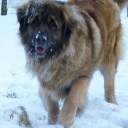 Dit was ooit het kleinste pupje van alle Toogwijkjes en kijk nu wat er van Calimero is geworden? Deze dame heet nu Fiona want een Calimero is ze zeker niet meer.