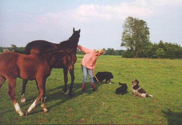 Noeska, Dolly  Blacky en Hettie tussen de paarden.