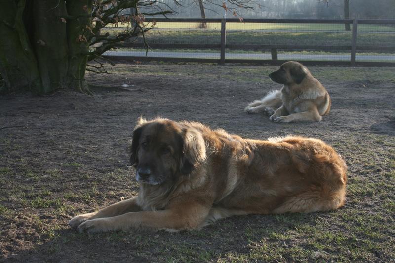 Angel en Bo van de Toogwijkhoeve.