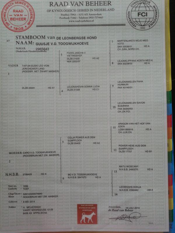 Stamboom Guusje